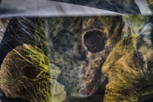 Skull in nature 1