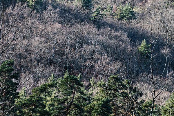 Loire-Tirage sur papier japonnais Kozo blanc